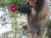 11.9.13 Nasser Hund
