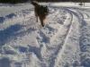 14.12. Schneehund