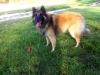 16.10. Isarhund