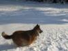 16.12.10 Schneespaziergang