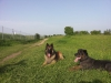 22.5.14 Hundemeile Unterhaching