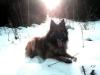 23.2. Schnee im Perlacher Forst