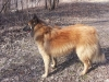 4.4.13 Nasser Hund