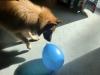 7.9. Luftballons